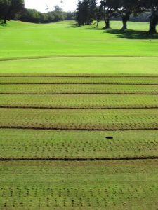 Greens Aeration at Maui Country Club Golf Course