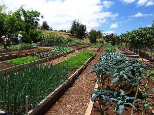 Kupaa Farms CSA Garden