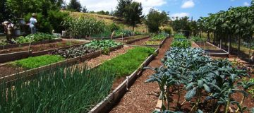 Meet Kupa'a Farms Janet Simpson & Gerry Ross